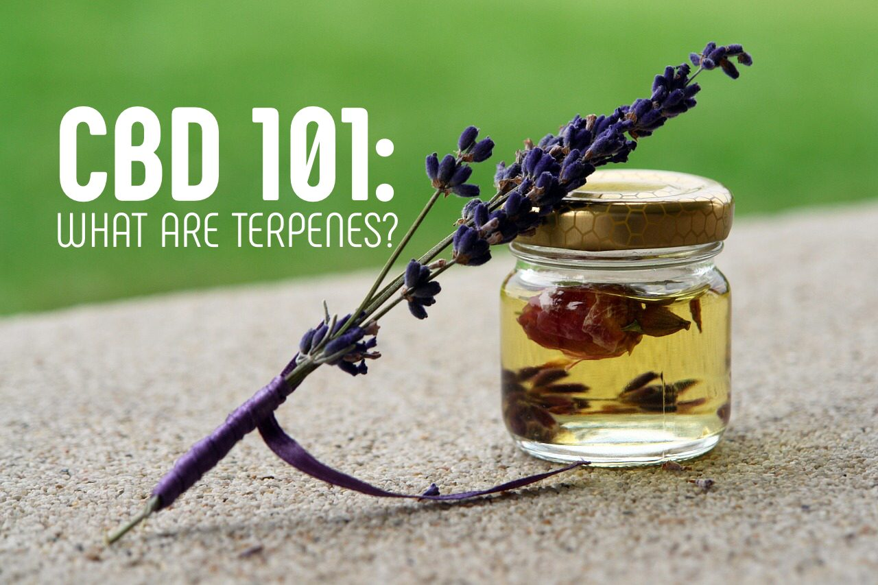 Read more about the article CBD 101: What Are Terpenes?
