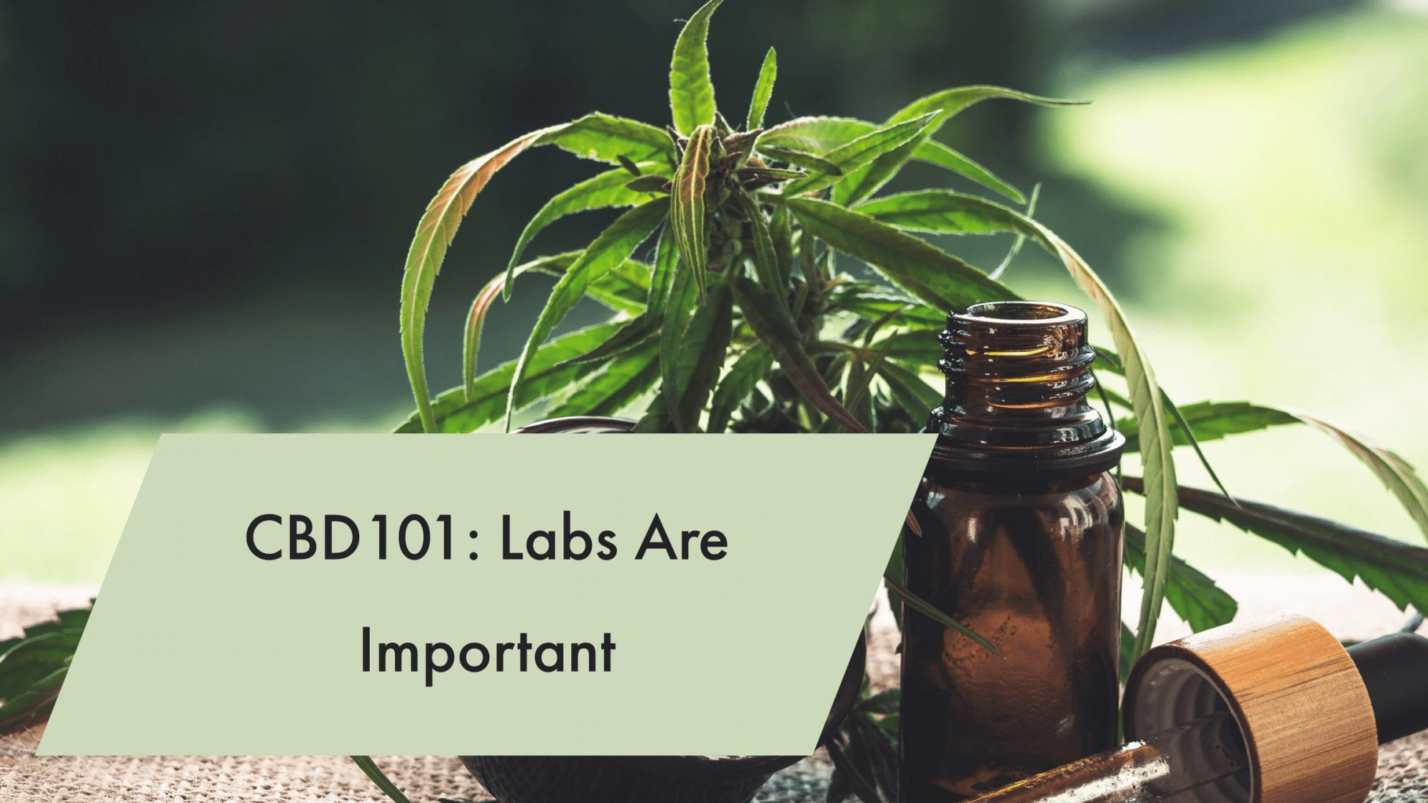 You are currently viewing CBD101: CBD Labs Are Important