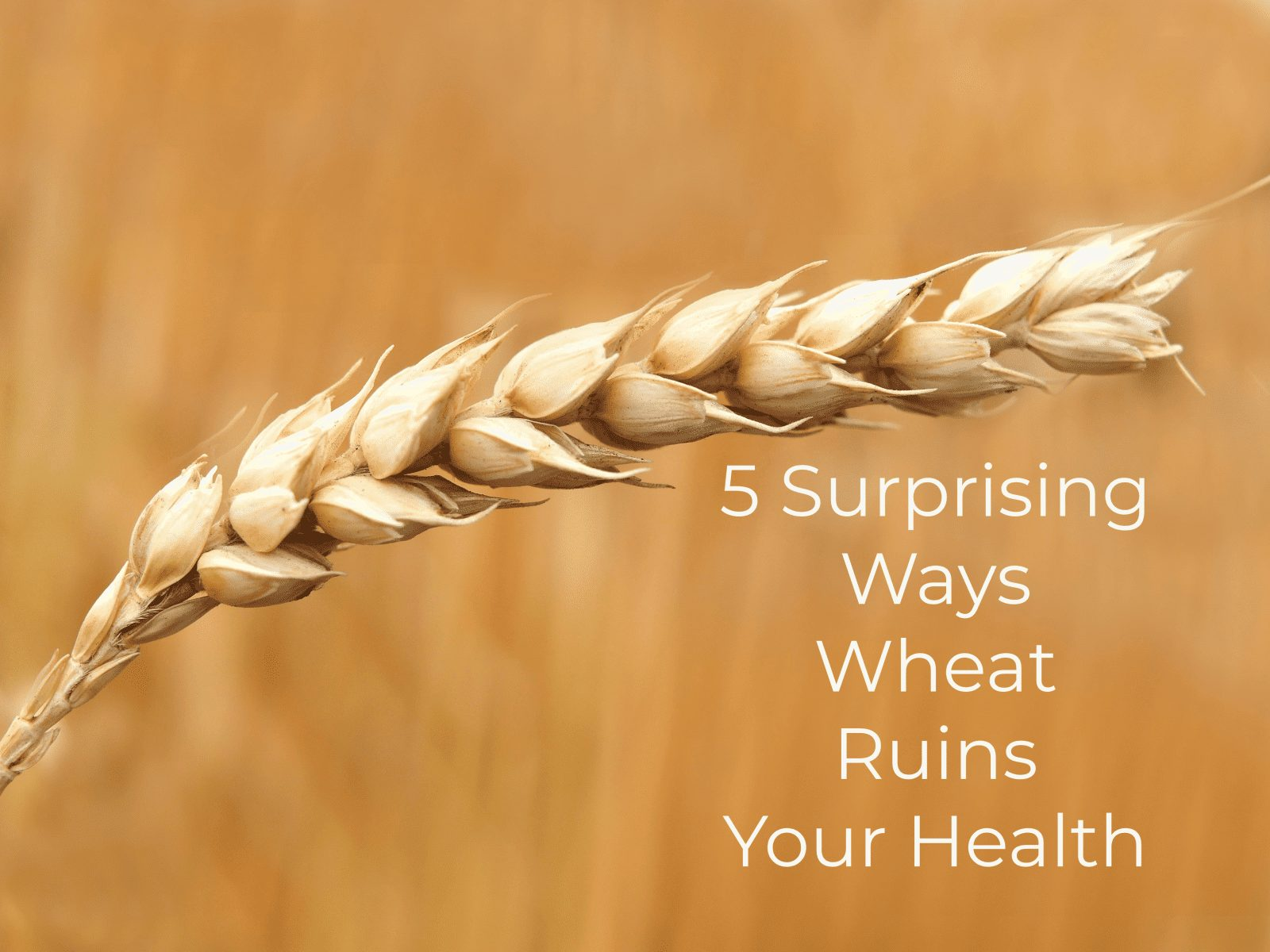 Read more about the article 5 Surprising Ways Wheat Ruins Your Health