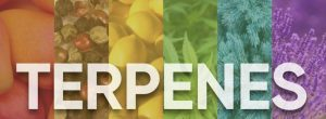 Read more about the article Learn About the Best Terpenes For ADHD and Feel Better Today!